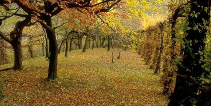 Le stagioni della natura