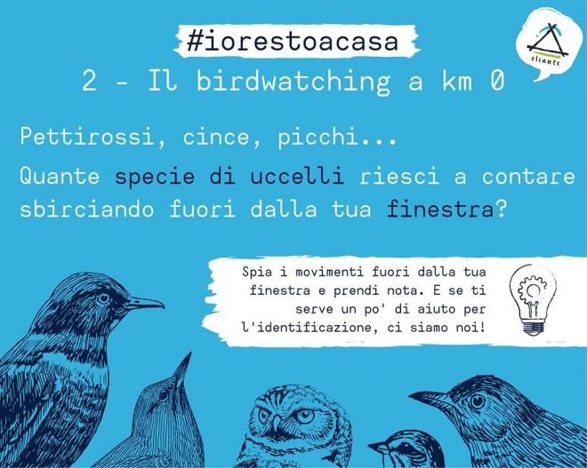 Covid 19, le attività di educazione ambientale da fare in casa \ #2 Birdwatching a Km 0